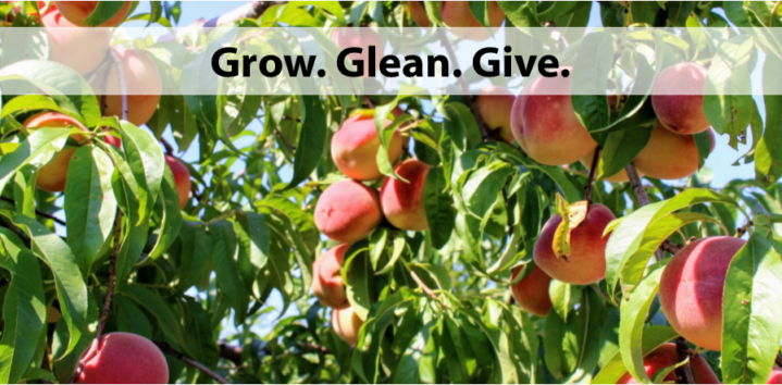 Grow. Glean. Give.