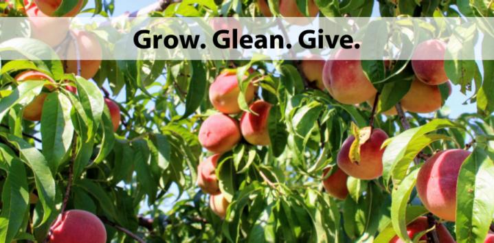 Grow. Glean. Give.